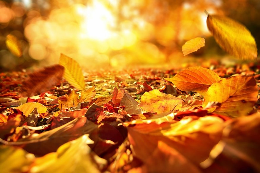 Red, orange, and yellow leaves cover the ground with sun peaking through branches above